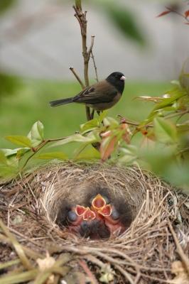 catenesting-materials-bird-nest1